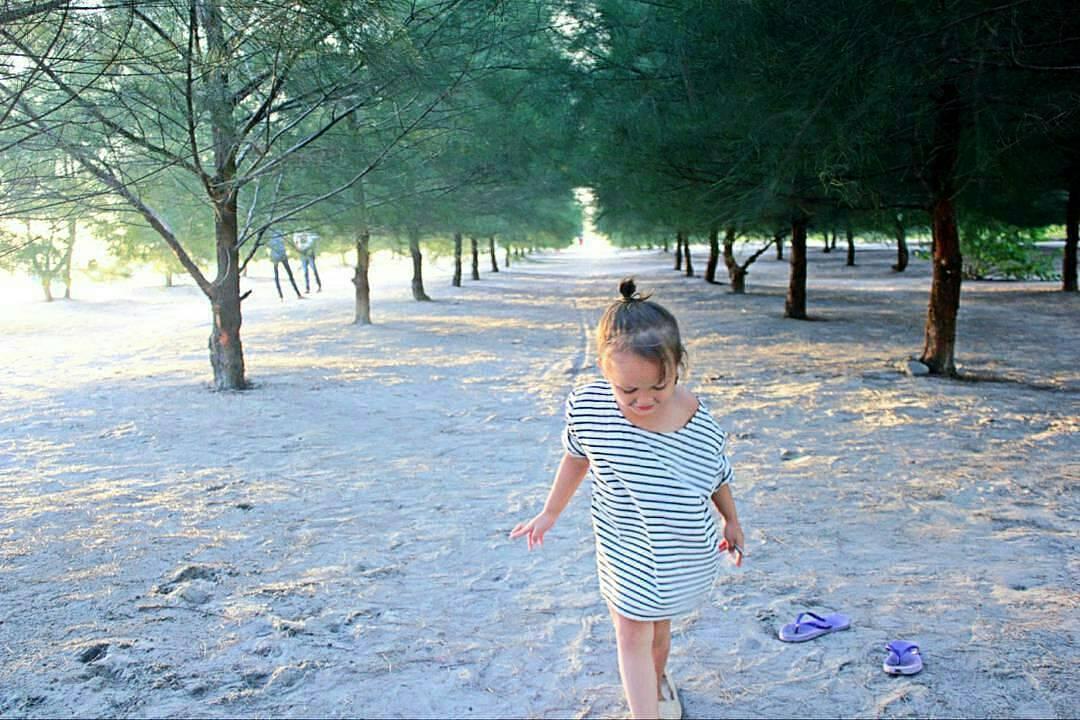Hutan Pinus Pantai Kata Pariaman